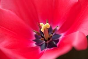 04-27-13 Roundup - Flowers