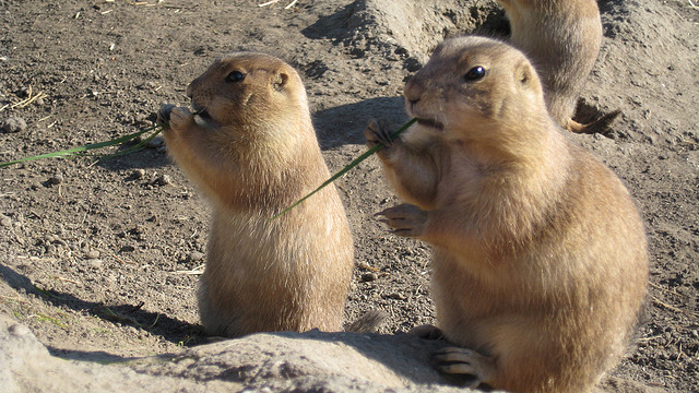 Passive Income and Pageviews - February 2014 - Groundhogs
