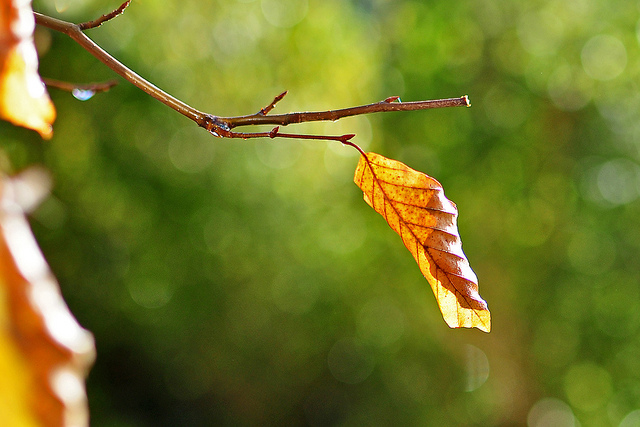 Passive Income and Pageviews - October 2014 - Leaf in Fall